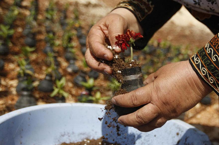 tear-gas-flower-pots-palestine-2
