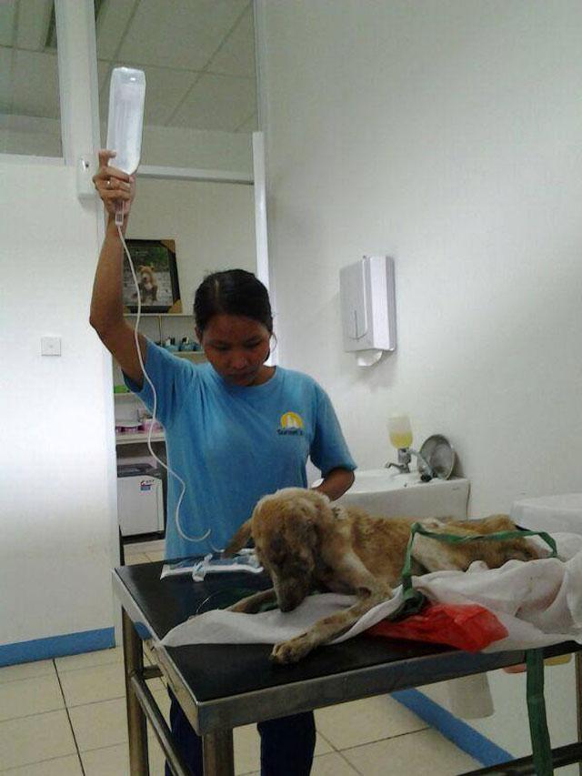rescued---perawatan-lalu-terpaksa-PTS-krn-kondisi-sangat-parah-(1)