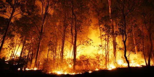 hutan-pinus-di-gunung-lawu-terbakar1