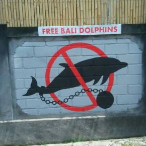 RIC O'BARRY'S DOLPHIN PROJECT X JAKARTA ANIMAL AID NETWORK // FREE BALI DOLPHINS